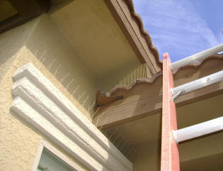Tile roof overhangs make great nesting sites