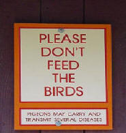Please don't feed the birds they carry diseases and one pigeon will turn into many in a short time.